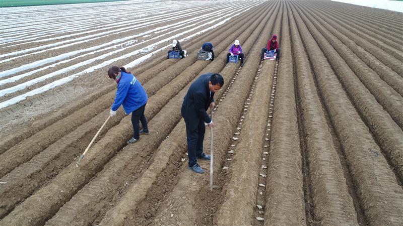 河北石家庄:谷雨时节农正忙