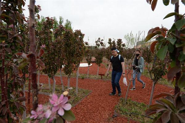 北京世园会首次将果树园艺展示纳入世园会展示项目当中