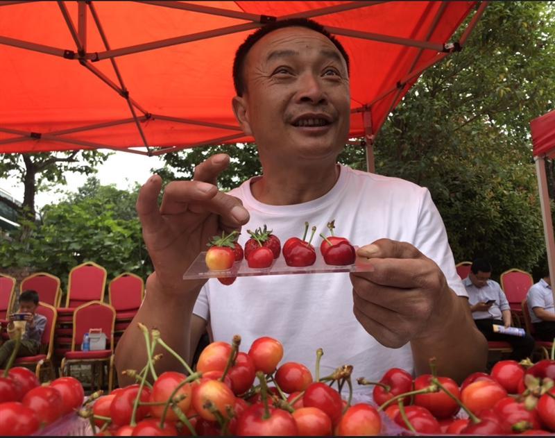"""河南新安:樱桃产业为什么这样""""红"""""""