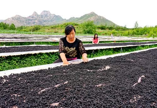 河北抚宁:林果富农家