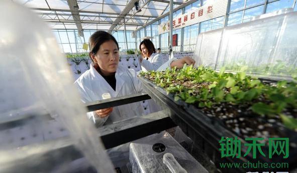 """""""校乡结合""""助推科技农业"""