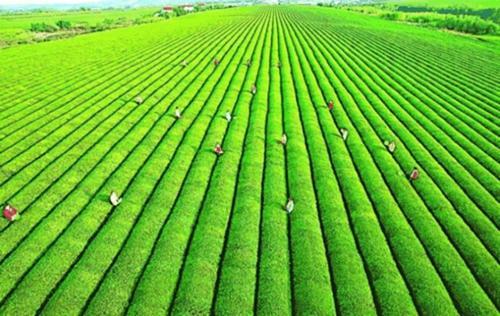 加快培育发展农业全