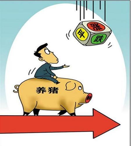 """猪粮比价进入""""过度下跌三级预警""""意味着什么?"""